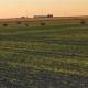 green farm field with deer on it