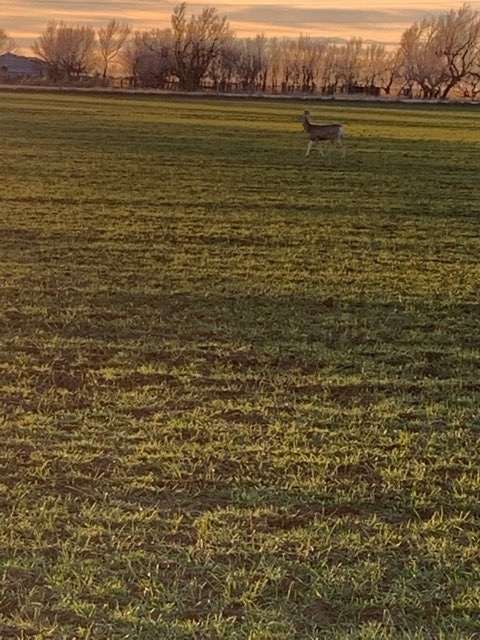 green field with deer on it