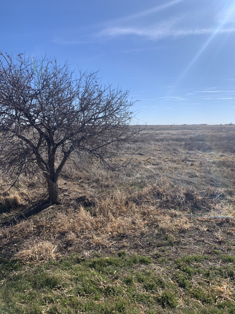 farm land with yellow bushing around a brown tree with no leaves