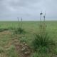 Randall County Grass 152